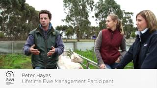 AWI Case Study: Lifetime Ewe Management