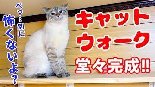 キャットウォークを初めて見た猫がビビって取った意外な行動がかわいすぎた thumbnail