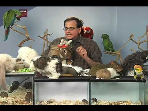Marc Morrone's Holiday Pet Tips