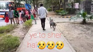 indian public reaction on pitbull dog