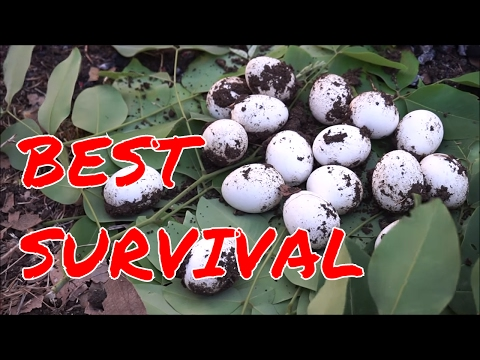 HOW TO COOK EGG NATURAL WAY -  FOOD FOR SURVIVAL - 1000 YEARS OLD RECIPE - EGGS COOKING IN THE SOIL