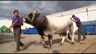 Bêtes à concours