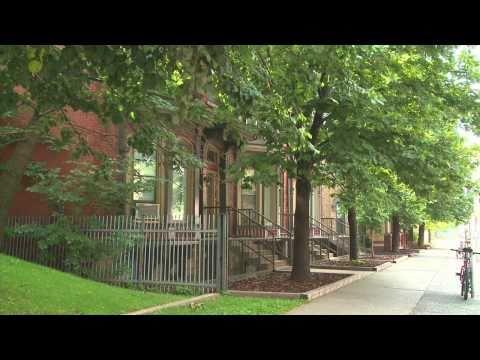 Urban Trees: The Climate-Friendly Gardener