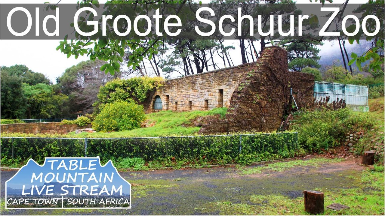 Old Groote Schuur Zoo   Table Mountain Live Stream - YouTube