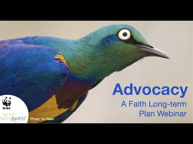 Webinar: Skills of successful advocacy