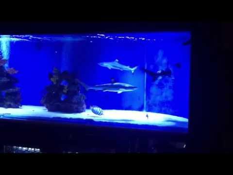 Saltwater Fish Tank, Blacktip Shark Aquarium for Home ...