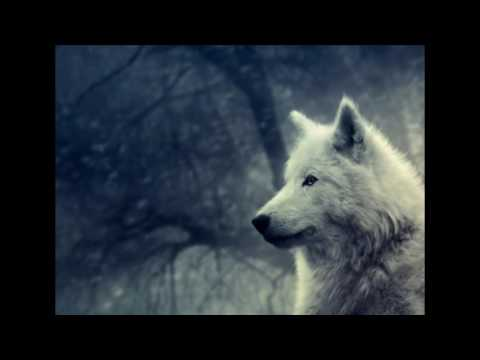 Fire, Storm, Rain and Wolf | Relaxing Nature Sounds