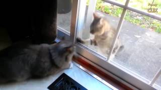 Cats Being jerks Compilation