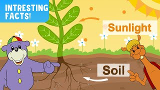 Interesting Facts About Soil & Sunlight!