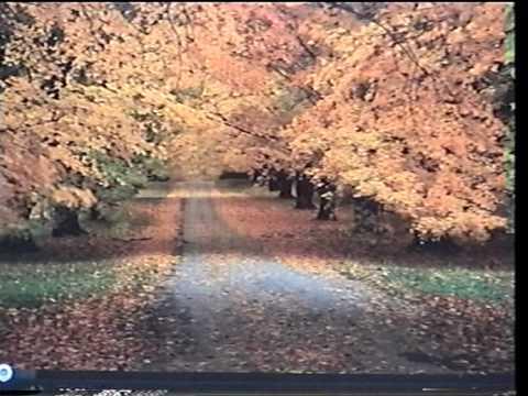 Seri Banang - Instrumental by zan1948