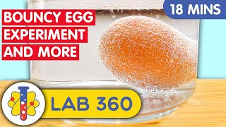 AMAZING EGG EXPERIMENTS YOU CAN DO AT HOME | Lab 360