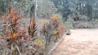 colour of baganbari