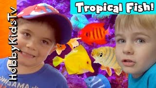 Tropical Fish Aquariums! Angel Puffers and More by HobbyKidsTV