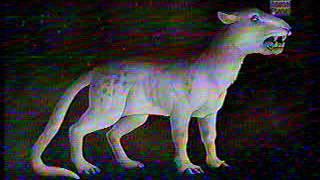 Ewolucja ssaków drapieżnych - Pochodzenie drapieżnych ssaków
