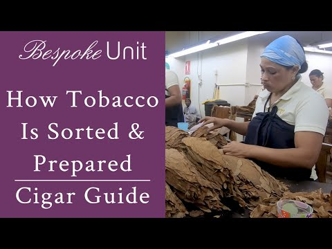 How Tobacco Is Sorted & Prepared For Rolling Into Premium Cigars By Davidoff