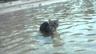 Кошка Федора плавает в озере