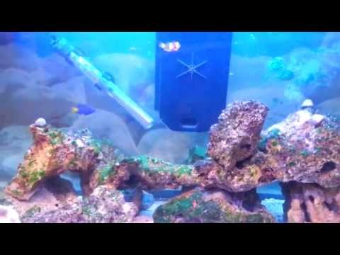Corals Problems - Clown Fish Dying - Reef Tank