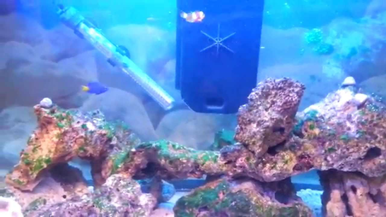 Freshwater aquarium fish keep dying - Corals Problems Clown Fish Dying Reef Tank