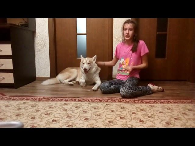 Изображение предпросмотра прочтения – ЮлияШамардина читает произведение «Собака» И.С.Тургенева