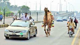 Walking in Islamabad Pakistan 🇵🇰 Street Life Scenes Sights & Sounds People Market