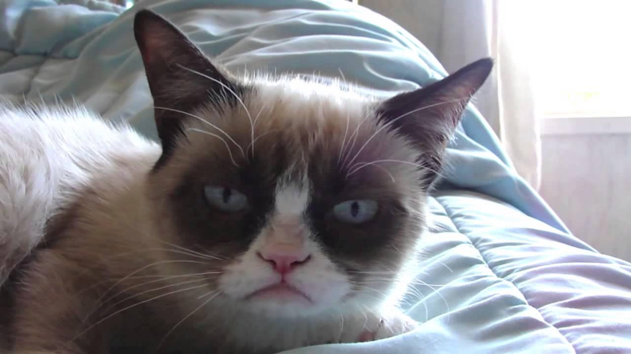 "Menginspirasi Banyak Meme, Kucing Bermuka ""Cemberut Permanen"" Dikabarkan Mati #beritahariini"