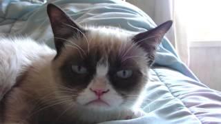 Sleepy Grumpy Cat! thumbnail