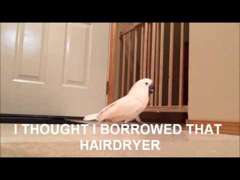 Gotcha With Subtitles (By Gotcha The Cockatoo)