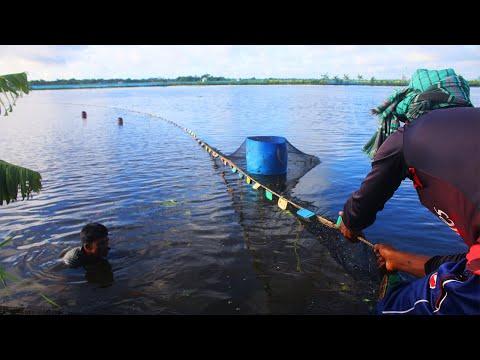 Pro Fisherman Fishing | Net Fishing Advance Method