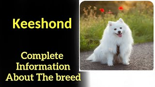 Keeshond. Pros and Cons, Price, How to choose, Facts, Care, History