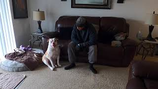 American bulldog puppy knows exactly what she likes