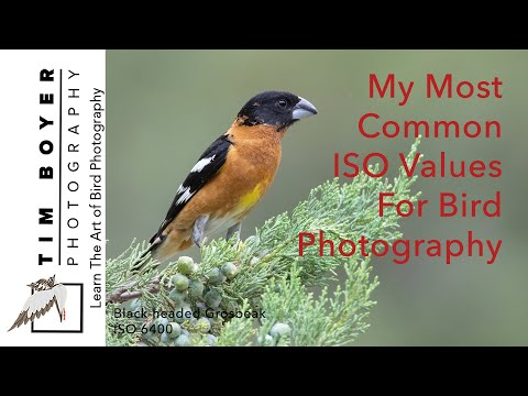 MY Most Common ISO Values For Bird Photography