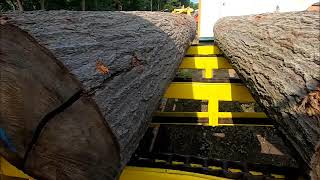 sawing clear red oak
