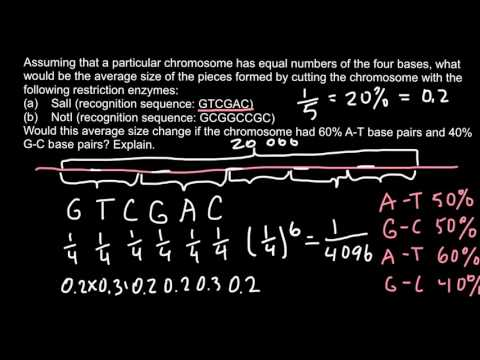 How to calculate occurrence frequency  of restriction enzyme sites on DNA fragment?