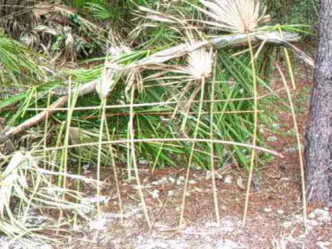 survival shelter (florida)