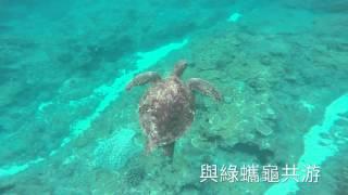 與綠蠵龜共泳,悠遊小琉球,20160417