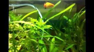 new 64 litre fish tank
