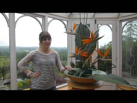 How to make a modern floral display using birds of paradise by The Naked Florist