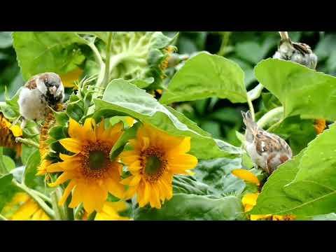 Top Garden Secrets --ज्यादा फूल🌺🌻🌹🌷 उगाने के लाजवाब Tips --Tips for more blooming - 동영상
