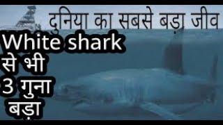 सभी animals का बापु  //sabhi animals ka baap