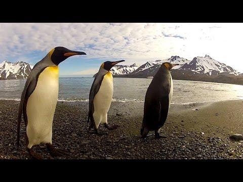 GoPro: Penguin Dance-Off
