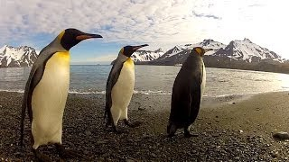 GoPro: Penguin Dance-Off
