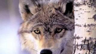 LEZGINKA!!! ЛЕЗГИНКА!!!Kavkaz Dance Music Wolves  Eagles   YouTube