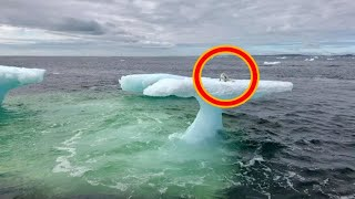 Arctic fox stranded on iceberg rescued by fishermen