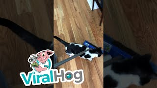 Adorable Foster Cat Helps out with Chores || ViralHog