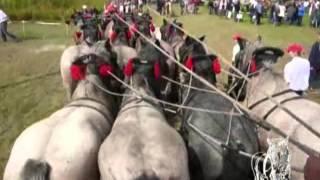 Attelage à 12 chevaux de Marnix De Brabander