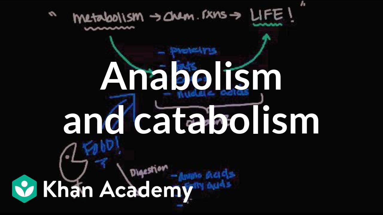 overview of metabolism  anabolism and catabolism