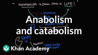 Overview of metabolism: Anabolism and catabolism | Biomolecules | MCAT | Khan Academy