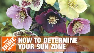 How To Determine Your Sun Zone And Plant A Shade Garden