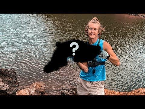 Bass Fishing In Hawaii II WHAT DID I CATCH???? II Lake Wilson (Wahiawa Reservoir, Oahu)