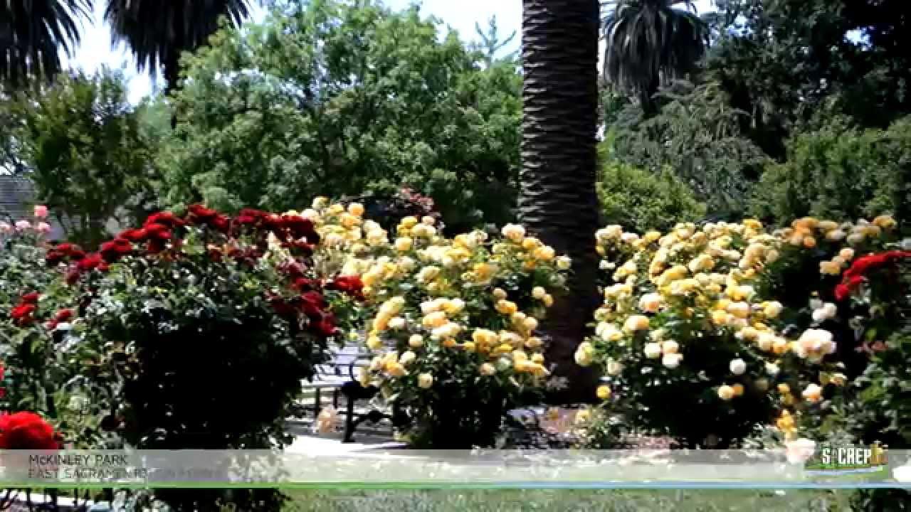 McKinley Park Rose Garden In East Sacramento, Ca   YouTube